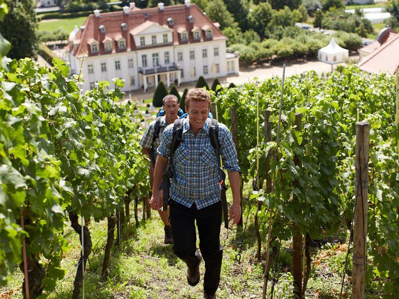 Schloss Wackerbarth - Weinbergwanderung
